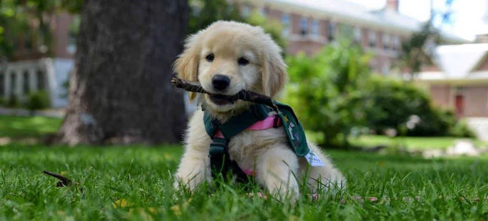 puppy on campus